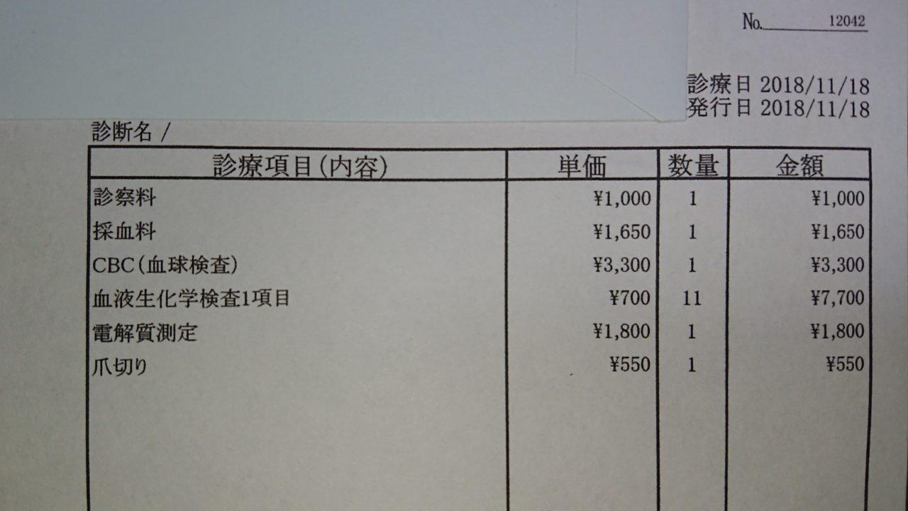 うさぎを病院に連れて行った時の費用を実際の請求書を例に解説します。